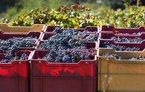 В Саратове изъяли виноград и капусту из Литвы