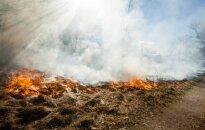 В Ниде подозревают поджог леса