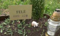 Gyvūnų kapinės