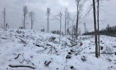 žiema, miškas, pelkė, orai, sniegas, šaltis