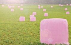 Lietuvius stebina neįprasta akcija: rožiniais šieno ritiniais siekia kilnaus tikslo