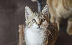 Neįtikėtiną istoriją išgyvenusi maža katytė Java ieško namų!
