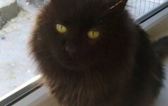 katinas
