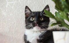 Trys 2,5 mėn. katytės iš gatvės ieško namų!