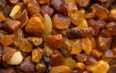 Конкурс на добычу янтаря в Куршском заливе не вызвал интереса