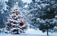 Etnologė G. Kadžytė: per Kalėdas svarbiausia ne patiekalų skaičius