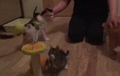 Katinėlių šeimynai reikia pagalbos!