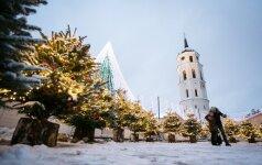 Еще один сюрприз в Вильнюсе: аллея елочек