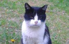 Katinėlis Markizas – jo meilumo užteks priimančiai šeimai