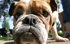 Ką daryti, jei įkando šuo?