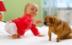 Kaip supažindinti šunį su naujagimiu?