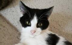 Katinas Ivaška laukia naujojo šeimininko skambučio