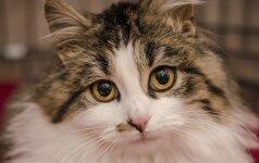 Žavioji katytė Juna ieško namų!