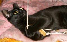 Dovanojamas katinėlis Smaliukas