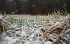 В выходные – сильный ветер и мокрый снег