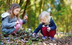 Bunda ne tik erkės: ką reikia žinoti apie vabzdžių įkandimus