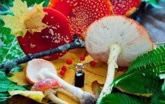В Литве за баснословные деньги скупают мухоморы