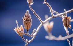 Vasario 15-oji: vardadieniai, astrologija