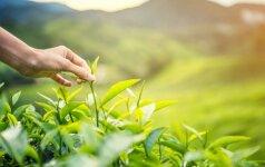 Odos priežiūros priemonės su arbata – efektyviai kovai su senėjimo požymiais