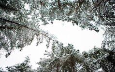 Погода: на один день страну охватит мороз