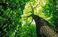 Miškas – tai socialinis gamtos tinklas, kur medžiai susikalba, rūpinasi atžalomis
