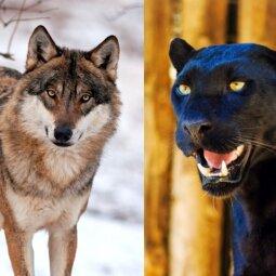 Kurį gyvūną rinksiesi? Slapčiausias tavo baimes išduos būtent šis testas