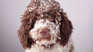 """""""Mieliausio šuns rinkimai"""": laimėk Kalėdų dovaną savo augintiniui!"""
