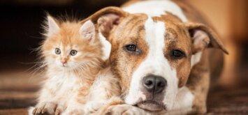 Kaip bendravimas su gyvūnais veikia jūsų sveikatą