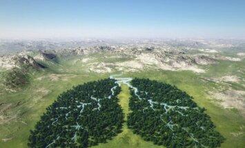 Miškai - ne tik mūsų planetos plaučiai