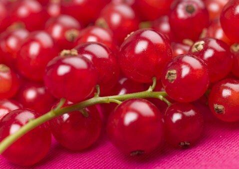 Ruošiamės žiemai: raudonųjų serbentų drebučiai