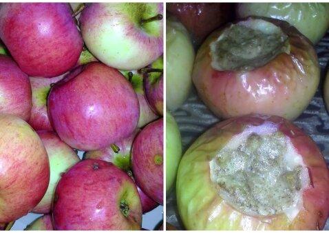 Dar mūsų močiučių mėgtas patiekalas iš obuolių ir varškės