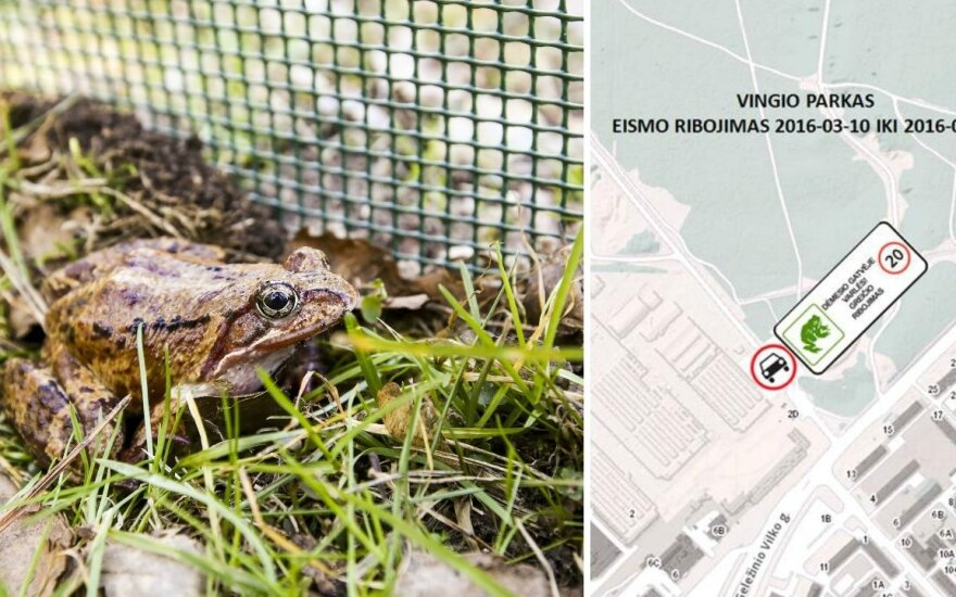 Dėl varliagyvių Vingio parke bus ribojamas eismas