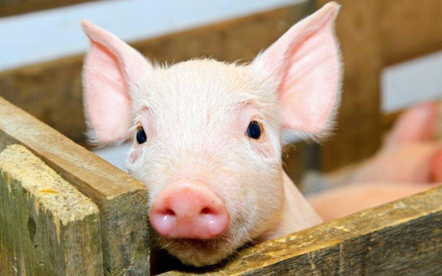 Мусульманам-беженцам в Пабраде подложили свинью