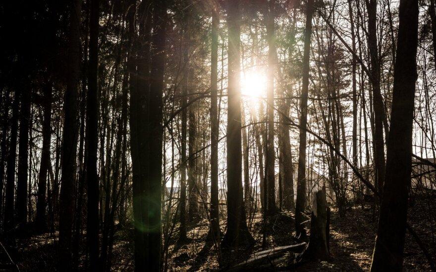 В лесу на ул. Белая Воке обнаружено тело мужчины
