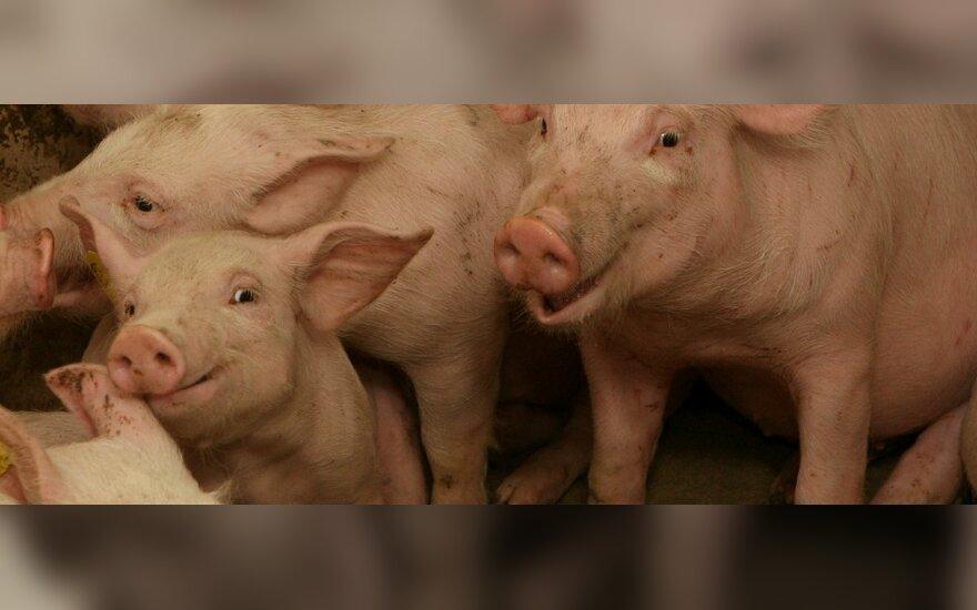 В Йонавском районе будет уничтожено 2000 свиней