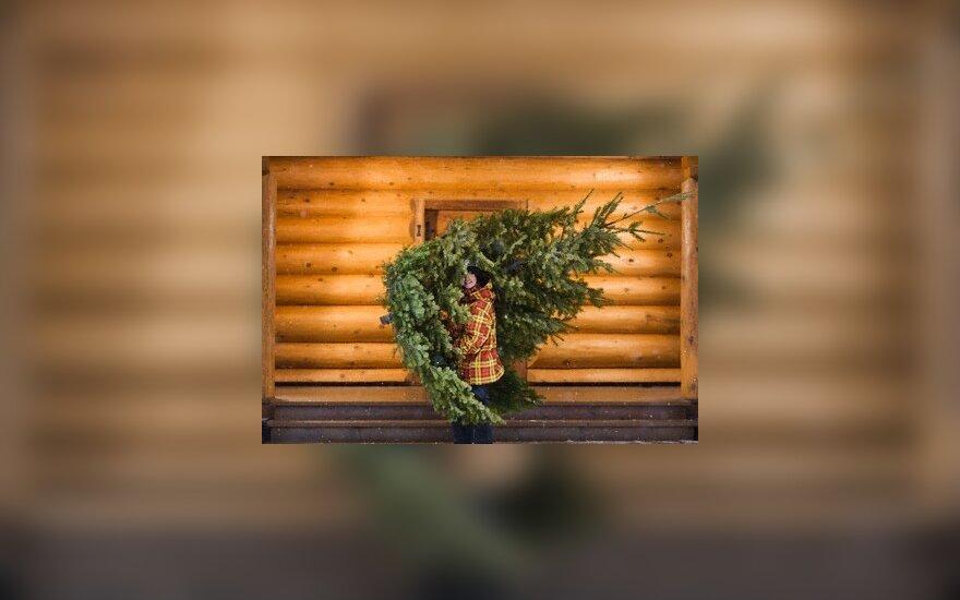 В Германии - рекорд по покупкам елок