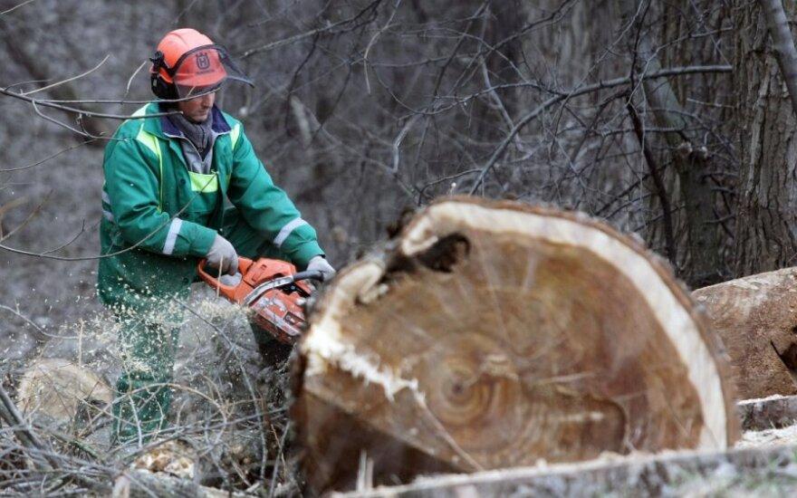В Варенском районе поваленное дерево убило работника