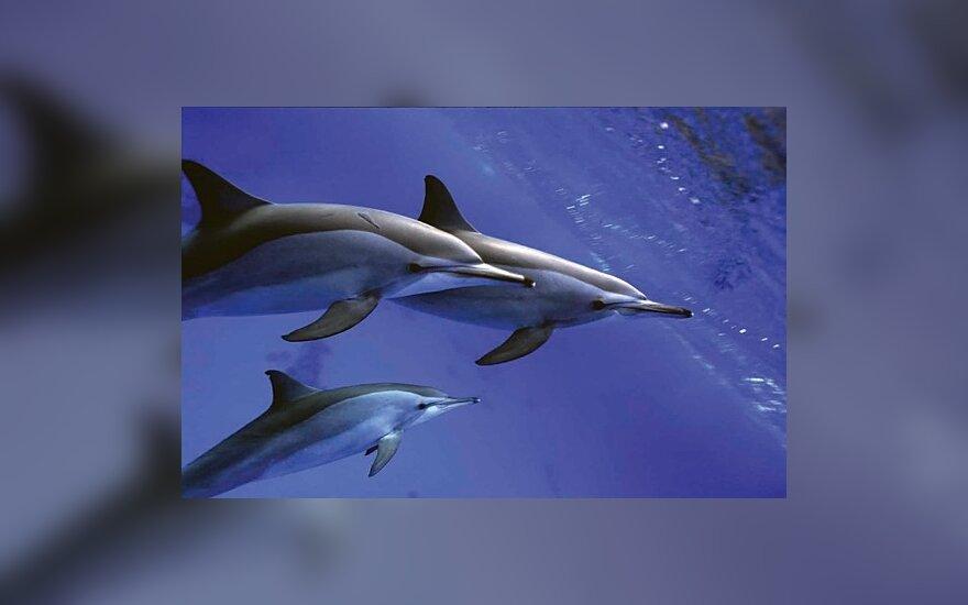 Дельфины способны на детоубийство