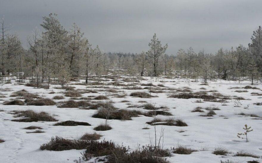 Čepkeliai žiemą