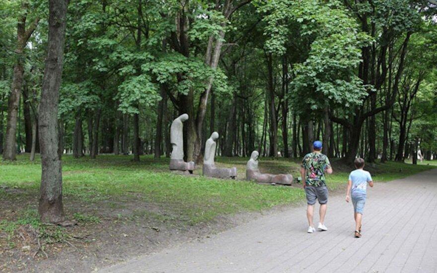 Сейм Литвы рассмотрит предложение ограничить вырубку зрелых деревьев в городах