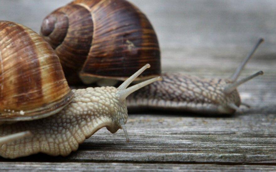 Alternatywne żródła energii: baterie ze ślimaka