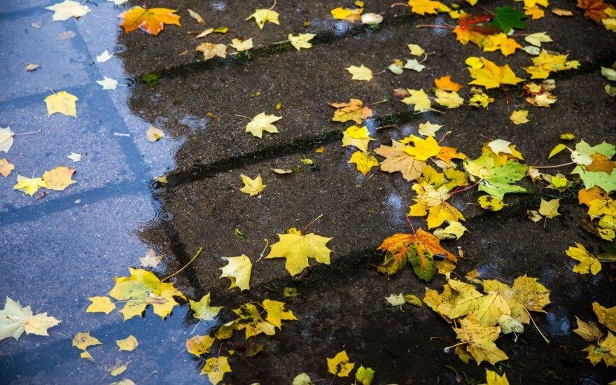 Погода: в субботу дожди, в воскресенье прояснения