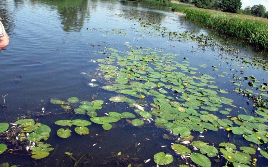 Nevalytos Šilutės nuotekos 2009 m. Šyšoje išgaišino daug žuvų