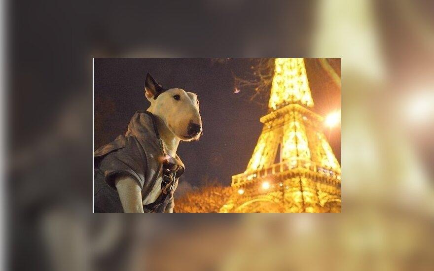 10 животных-путешественников в Instagram