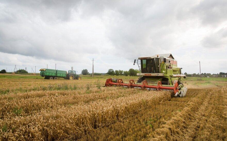 В Литве собрали урожай более чем с половины посевных площадей