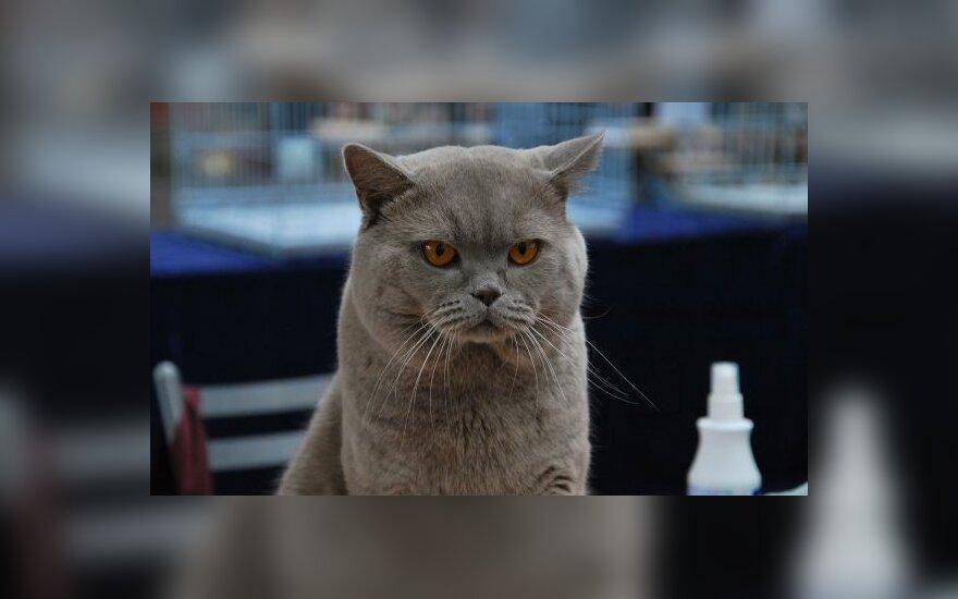 Arabia Saudyjska: Kot zatrzymał start samolotu z Rijadu
