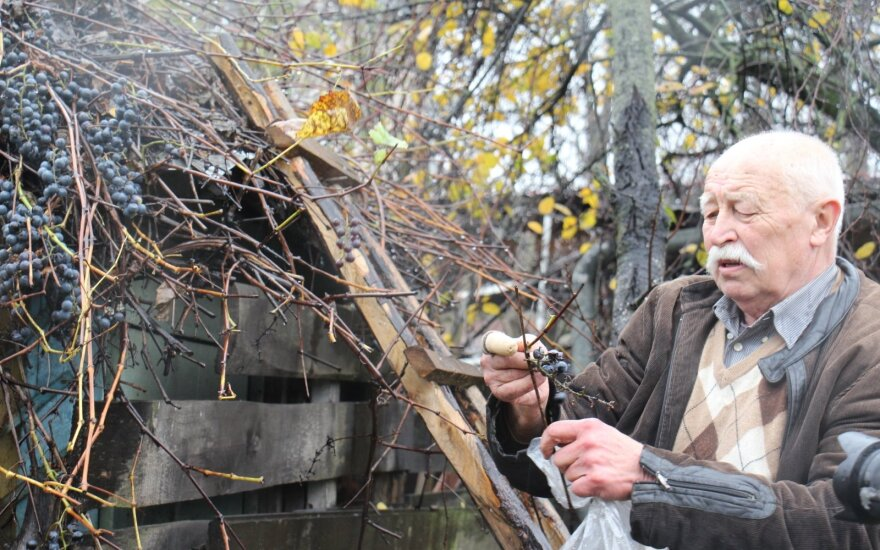 Загрязнение в Клайпеде: жители боятся есть овощи, службы берут их образцы для анализа