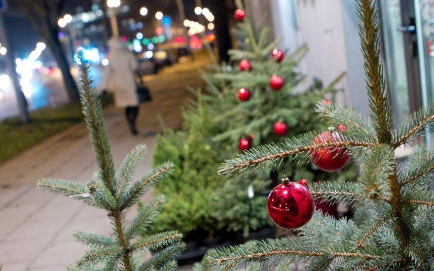 Торговля новогодними елками: цены останутся прежними?