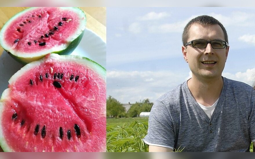 Kęstučio Zinkevičiaus arbūzai