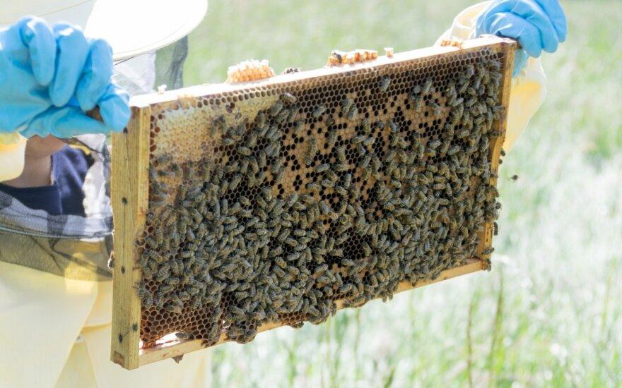 Bitės, bitynas